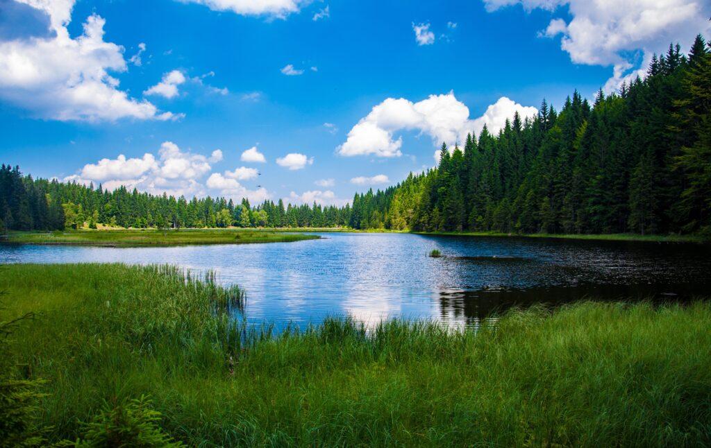 Pokrajina jezero gozd