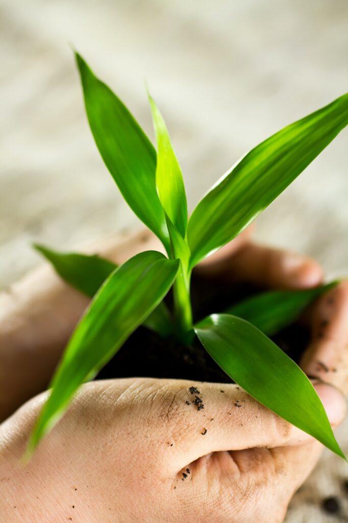 Green Clean Prijazna do okolja