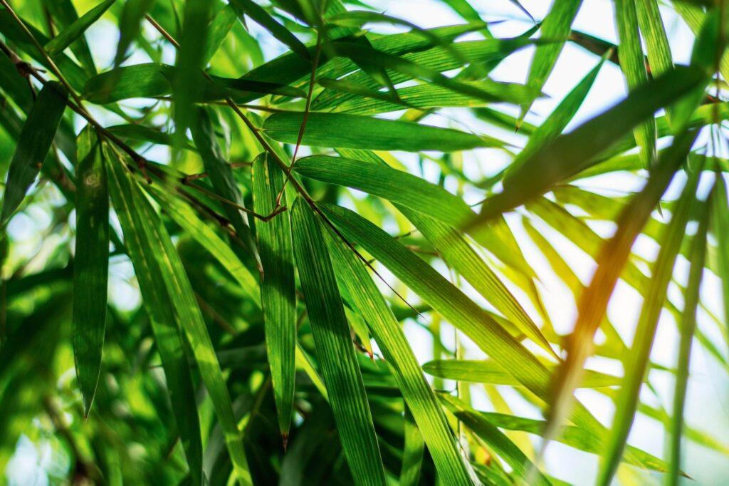 Green Clean Zeleno